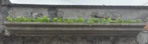 Jardineira Dharma